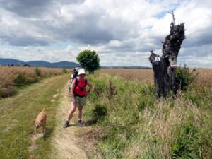 Begegnung mit einem frei laufenden Hund