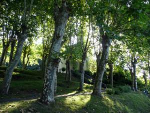 Église Saint-Pierre von Lareule versteckt hinter Luabbäumen